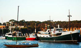Ulladulla Fishing Wharf, home to numerous deep sea Trawlers.